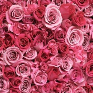 Cherish Roses